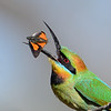 Birds - selected images : Selected Bird images from around the world. Enjoy and thank you for visiting.